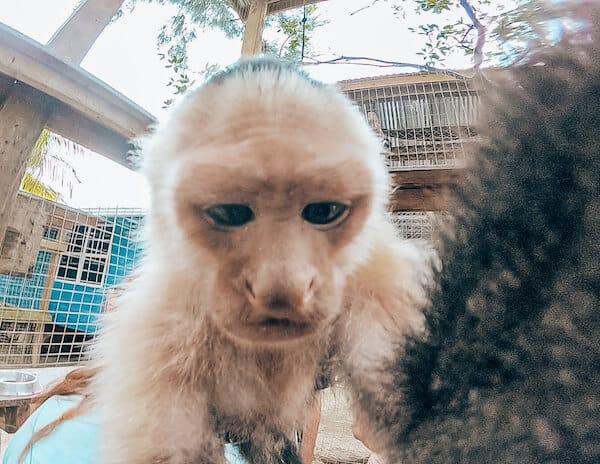 Monkey at Daniel Johnson's Hangout in Roatan