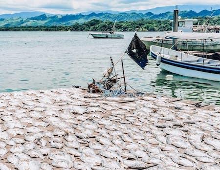 Fish drying in the sun in Livingston, Guatemala • TastyItinerary.com