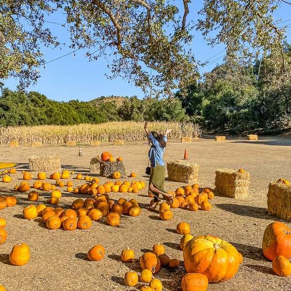 Boccali's Pumpkin Patch... pumpkins with female running through the pumkin patch