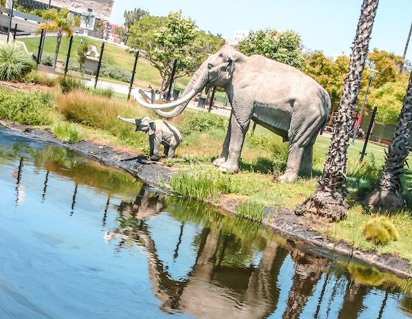 lake of tar and prehistoric elephants